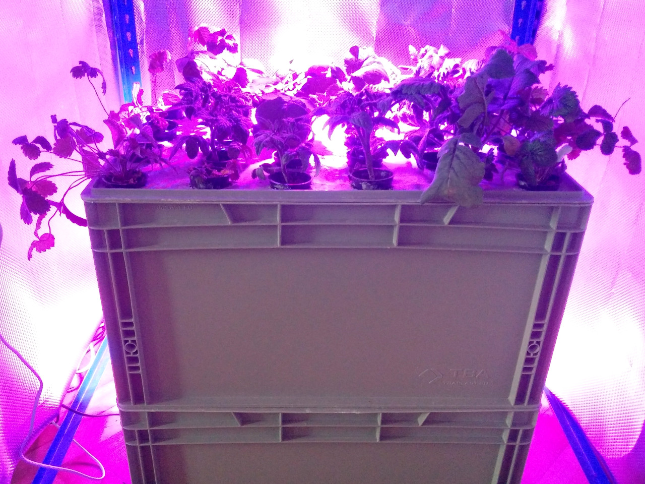 Growing box with lights on